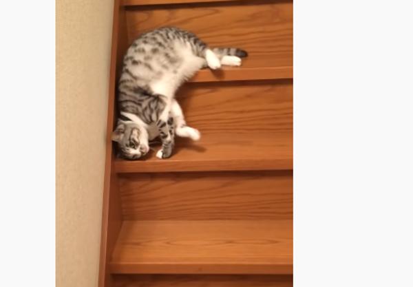 【犬・猫の面白い動画】