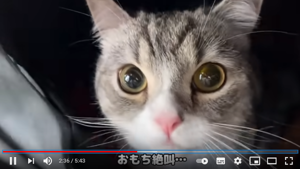 【病院に連れていかれる『猫』動画まとめ】